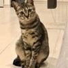 保護猫 Coteru 55日目 - 虫歯予防デー