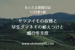 【秋の野菜作り】サツマイモの収穫と早生タマネギの植えつけと畑の冬支度
