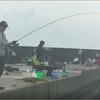 三重県波切漁港 泳がせ釣り、アオリイカ、サビキ釣り