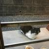 野良猫バットニャン生態調査