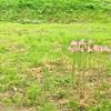 【闇日記】適応障害になってわかったこと その5
