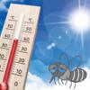連日の猛暑で蚊が夏バテ!?