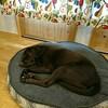 犬用ベッド DIY1