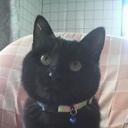 黒猫's blog