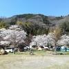 【道志】満開の桜の下でお花見キャンプ! ~ 青根キャンプ場 その1