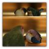 鳥内会の寄り合いルン♪