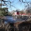 地図子、烏山川を歩く -2 じゃぶじゃぶ池から高源院まで-