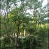 サクランボの木と今日の花