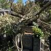 台風一過。さすがの湖西市も被害多数。
