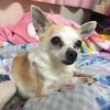 今日は愛犬で社長の虎太郎(こた)の誕生日!みんな盛大に祝ってあげてね!