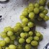 フルーツマニアが選ぶ、ぶどう品種ランキング!甘い、皮ごと、種なし、おいしいぶどうはどれだ⁈