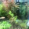 インボイスの水草たち