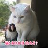 猫と鳥は一緒に飼える?仲良しになれるの?