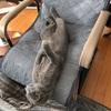 【コタツ生活】居間快適化計画【猫さん】