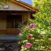 京都・紫野 - 牡丹咲く 大徳寺黄梅院