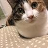 【愛猫日記】毎日アンヌさん#20