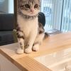 子猫が喜ぶおもちゃBEST3!お金をかけなくてもいいお手軽&楽しい猫おもちゃ