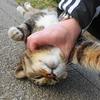 4月前半の #ねこ #cat #猫 その3