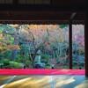 京都 紅葉+食べ歩き  前篇
