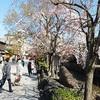 祇園白川の桜2020、お花見気分を写真と動画で味わう!!