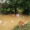 ある朝突然氾濫している雨季のナムソン川
