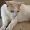 10月2日 護国寺から西巣鴨までの猫さま とその情景