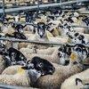 野性味あふれる「人間の家畜化」批判