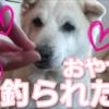 約2か月ぶりの動画更新!