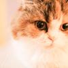 Cat&Dog(病気に負けるな)