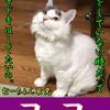 【猫ブログ】むーちょん家 総選挙 no.4 ココ