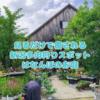 たにログ250 【新潟多肉狩りスポット】はなんぼ!多肉がある素敵なお庭!癒しのガーデニング!