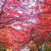 大山寺の紅葉2017