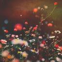 柳はみどり、花は紅