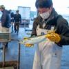 2021年4月17日 小浜漁港 お魚情報