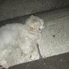 リラックスする白猫