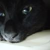 黒猫は幸せの象徴なのです!!
