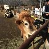 成田ゆめ牧場で動物とふれあい&いちご狩り体験!