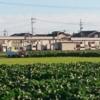 今日の田んぼ(゚∀゚)65