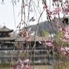 平安の雅を今に伝える平安神宮の見所は? (Kyoto, Heianjingu)
