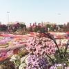 【ドバイ】ソフィテル・ドバイ・ダウンタウンと砂漠の花園、ミラクルガーデン