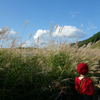 【おそとのええとこ】秋風にススキとそよごう 【奈良-曽爾村・曽爾高原】
