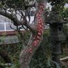 【見てるだけで幸せになる!?】庭の木にこんなものが・・・。(写真あり)
