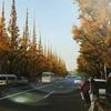 神宮外苑の銀杏並木ともうすぐ始まる「いちょう祭り」