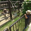 動物園リベンジ