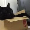 我が家の黒猫の話