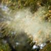 【花粉症の方必見】魔法のスプレーで花粉とのデスマッチを制する!