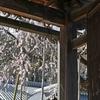 サクランピック2021・大会4日目 例年通りの平凡サクラ