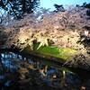 弘前城の桜祭りに桜の開花は間に合うのか?開花予想によると2016は早咲き