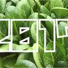 【2017年】「小松菜(こまつな)収穫量」ランキング