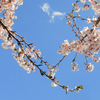 春風と共に